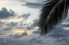 Palm leaf and cloudy sky Stock Image