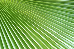 Palm Leaf Design stock photography