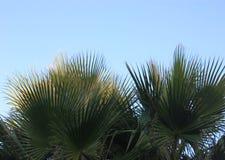 Palm leaf royalty free stock photo