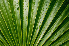 Palm Leaf Detail Stock Photos