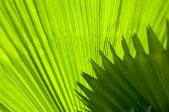 Palm leaf with diagonal lines closeup Royalty Free Stock Images