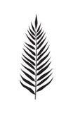 Palm leaf element Stock Images
