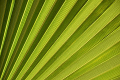 The palm leaf Royalty Free Stock Photo