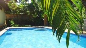 Palm leaf in front of the swimming pool on a tropical resort in slow motion. 1920x1080. Hd stock footage
