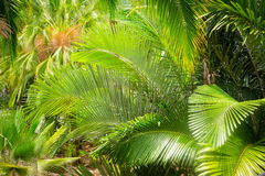 Palm leaf in the garden. Green palm leaf in the garden/ Sunday. Summer royalty free stock images