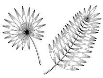 Palm leaf graphic black white isolated sketch illustration Stock Photos