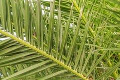 Palm leaf green background Stock Image