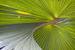 Palm leaf. Stock Images