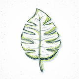 palm leaf handmade in sketch style Royalty Free Stock Photography