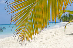 Palm leaf hanging over exotic beach Stock Photos