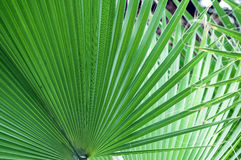 Palm leaf in hothouse Stock Photos