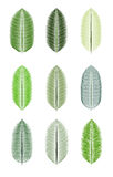 Palm Leaf Isolated Vector Illustration Royalty Free Stock Photography