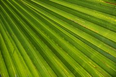 Palm, Leaf, James, Palm Tree, Close Stock Images