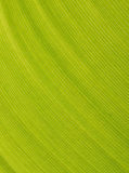 Palm leaf macro Stock Images