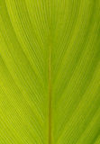 Palm leaf macro Stock Image