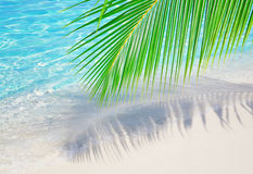 Palm leaf near the ocean Stock Images