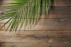 Palm leaf on a old wooden boards. stock photos
