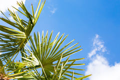 Palm leaf over blue sky background Royalty Free Stock Photos