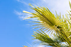 Palm leaf over blue sky background Royalty Free Stock Photo