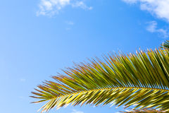 Palm leaf over blue sky background Stock Photos