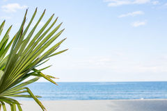 Palm leaf over blue sky and sea background Stock Photo