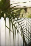 Palm leaf over fence Stock Images