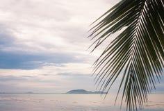 Palm leaf over tropical beach. Thailand stock photos