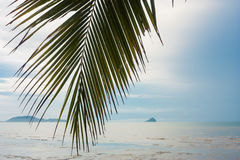 Palm leaf over tropical beach. Thailand royalty free stock photo