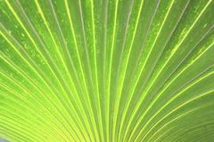 Palm leaf for page design Stock Images