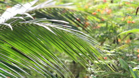 Palm leaf panorama stock video footage