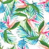 Palm leaf paradise background Royalty Free Stock Photography