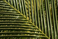 Palm leaf pattern Royalty Free Stock Photos
