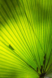 Palm Leaf Pattern Stock Photo