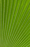 Palm leaf pattern background Royalty Free Stock Photography