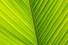 Palm Leaf Pattern Stock Photography