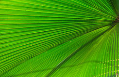 Palm leaf. Pattern in green Stock Photo