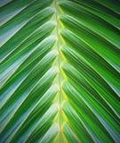 Palm leaf pattern Royalty Free Stock Photos