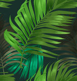 Palm leaf pattern Royalty Free Stock Photography