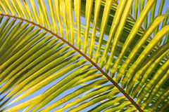 Palm leaf. Photo of a large palm leaf stock photo