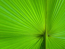 Palm Leaf radius. For web page or background Royalty Free Stock Image