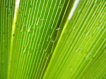 Palm leaf with rain drops Stock Images