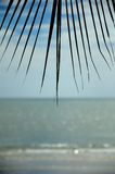Palm leaf and sea Stock Images