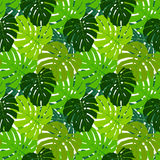 Palm Leaf Seamless Pattern Background Vector Royalty Free Stock Images