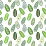 Palm Leaf. Seamless Pattern. Vector Illustration. Royalty Free Stock Photos