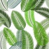 Palm Leaf. Seamless Pattern. Vector Illustration. Stock Photo