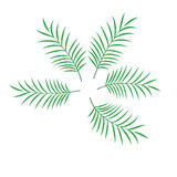 Palm leaf set vector isolated illustration Stock Photos