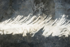 Palm leaf shadows Royalty Free Stock Photography