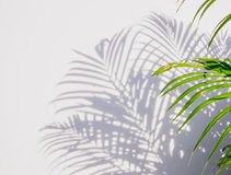 Palm leaf and shadows Stock Image