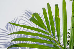 Palm leaf and shadows Royalty Free Stock Images