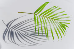 Palm leaf and shadows on a white wall stock photography